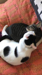 Lilly Boyette- Cats